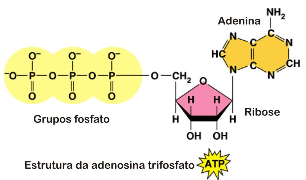 Sistemas energéticos ATP
