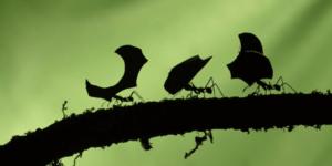 hormigas trabajando llevando comida