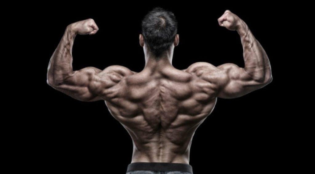 Todo sobre la Espalda: Desarrolla el grupo muscular más complejo