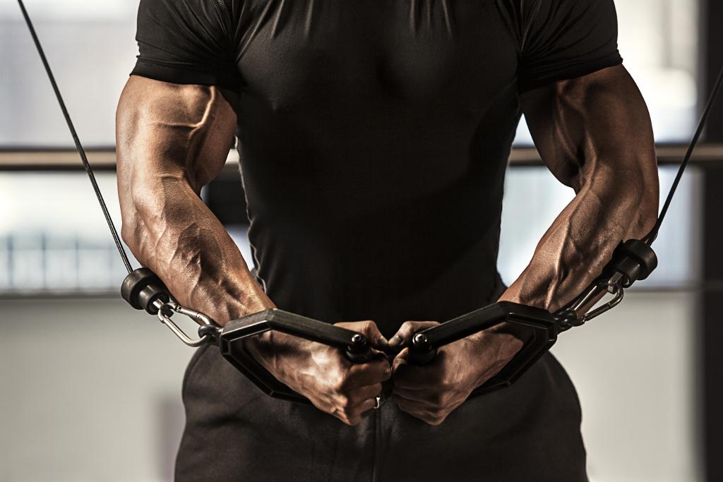 fibras musculares, cruce de poleas